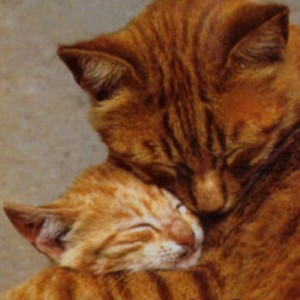 hug_a_cat