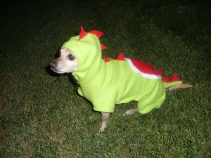 I couldn't find a Sentinel/Darlek crossover, so here's a dog in a Yoshi costume. Kawaii, or whatever.
