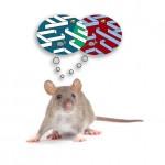 mouse-brain