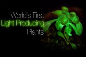 Bioglow-Plants-1