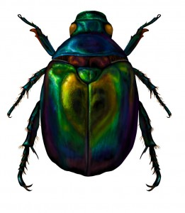 Not sure if I'd get away with actually showing the cannibalism so here's a pretty scarab!